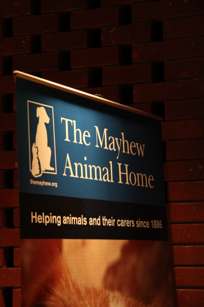 Mayhem animal shelter